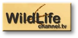 watch the wildlife channel