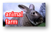 Watch animal farm